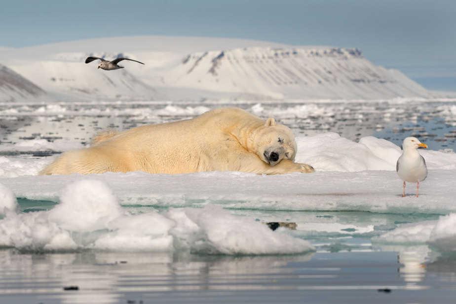 אוהב את התמונה. חולם על הקרח