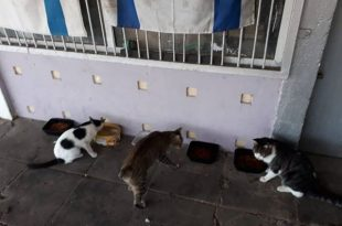 האכיל חתולים ונקנס. צילום: פרטי