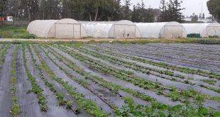 חממות וגן ירק צילום ברמן