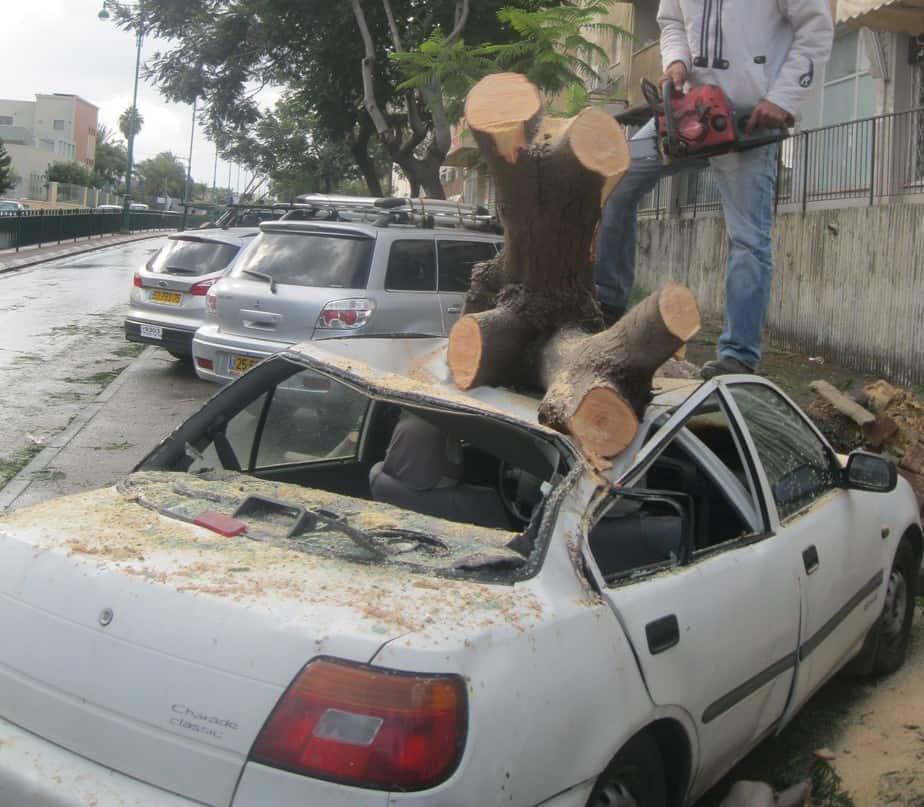 עץ נפל על מכונית  (צילום ארכיון : איילת קדם)
