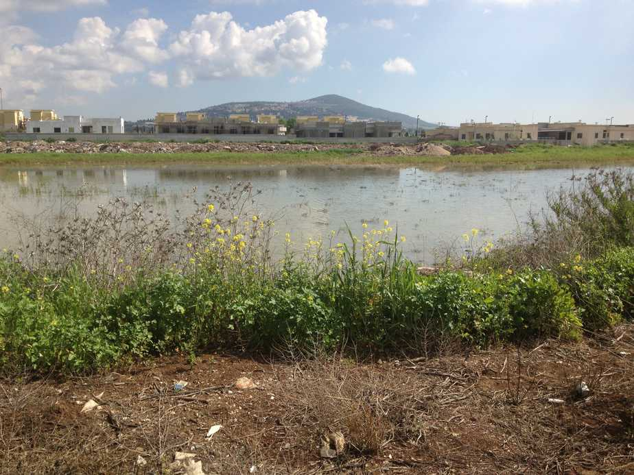 האגם החדש בעפולה   (צילום: עצמי)