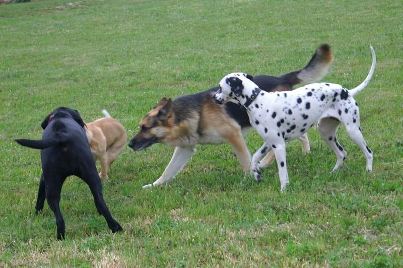 פארק כלבים