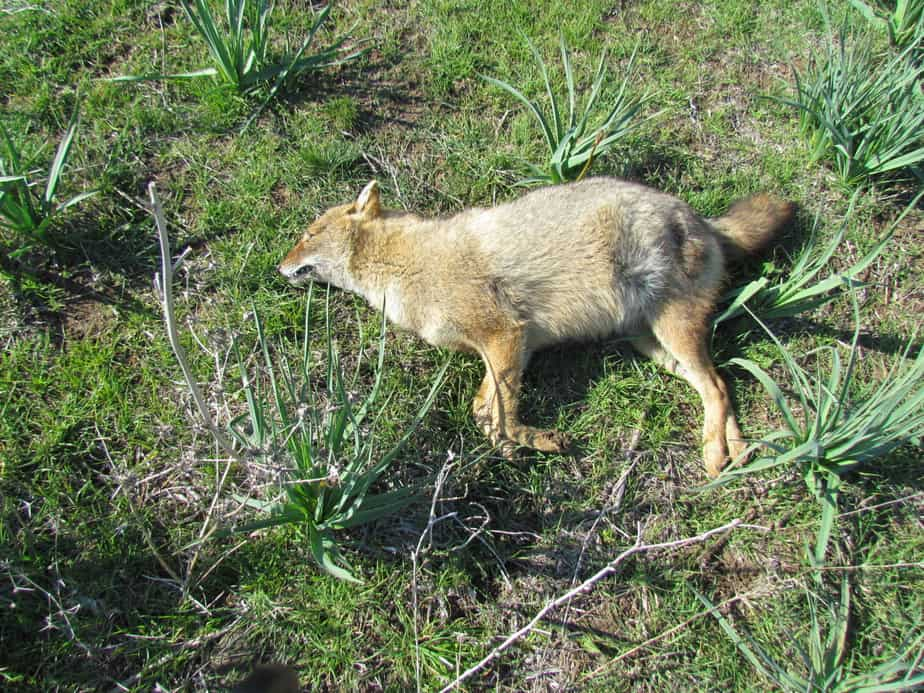 חיות בר שנמצאו מתות הבוקר ברמת הגולן