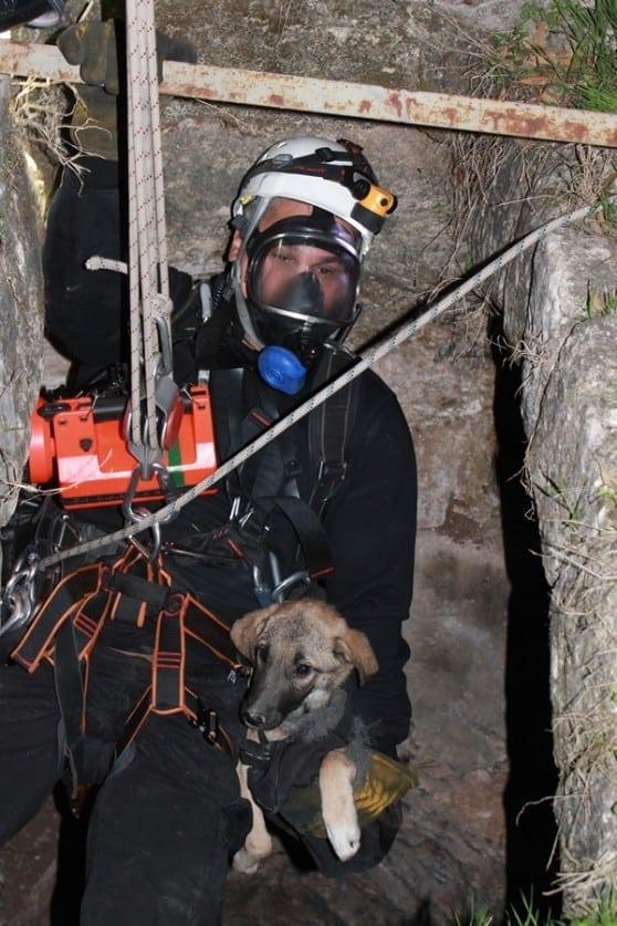חילוץ כלב מבור בטמרה