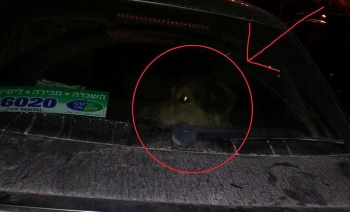 כלב הושאר ברכב של בעליו (צילום עצמי)