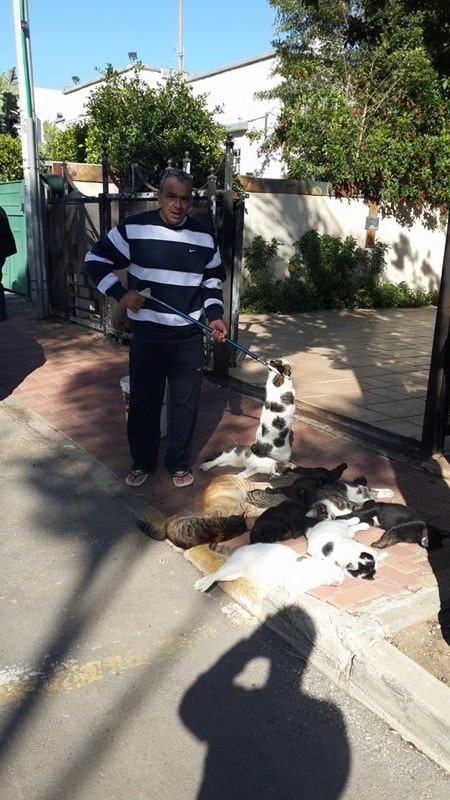 עובד השירות הווטרינרי של עיריית קרית ביאליק אוסף את גופות החתולים המורעלים (צילום באדיבות העירייה)
