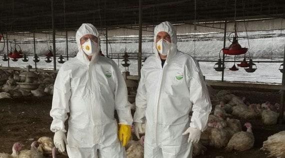 שפעת העופות (צילום: משרד החקלאות ופיתוח הכפר)