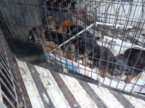 תנאים ירודים. הכלבים שנמצאו (צילום: עיריית חיפה)