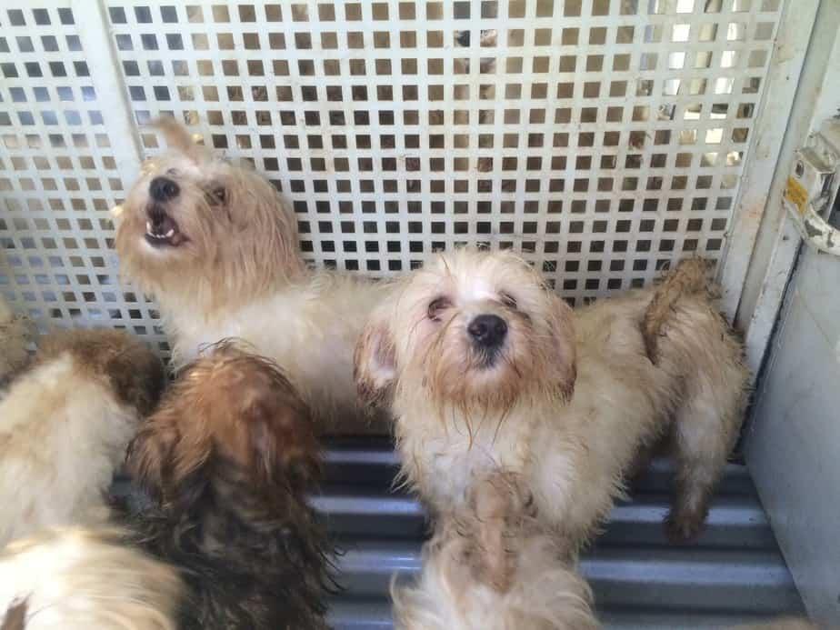 פינוי כלבים ממחסן באזור חדרה2