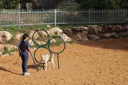 """פארק כלבים חדש בזכרון יעקב (צילום: באדיבות מתנ""""ס זכרון יעקב)"""