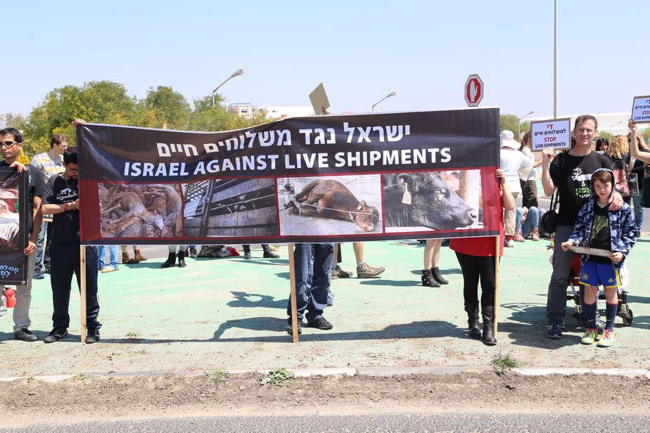 הפגנה נגד משלוח עגלים (צילום: באדיבות תנו לחיות