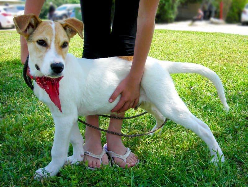 הכלב קפיץ (צילום באדיבות עמותת גלבוע)