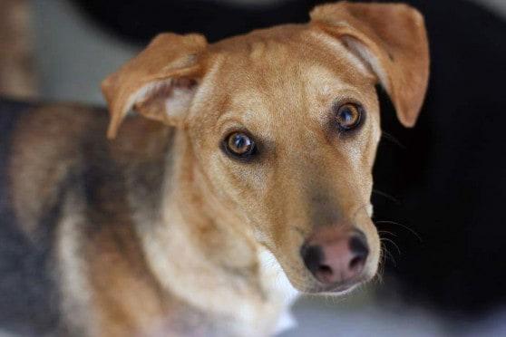 הכלב פוקי (צילום באדיבות עמותת כלבלאב)