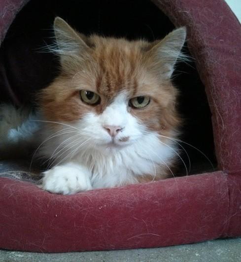 החתולה סנדרה (צילום באדיבות צער בעלי חיים)