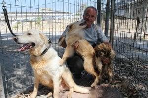 הווטרינר העירוני עם הכלבים שהוחרמו (צילום: עיריית חדרה)