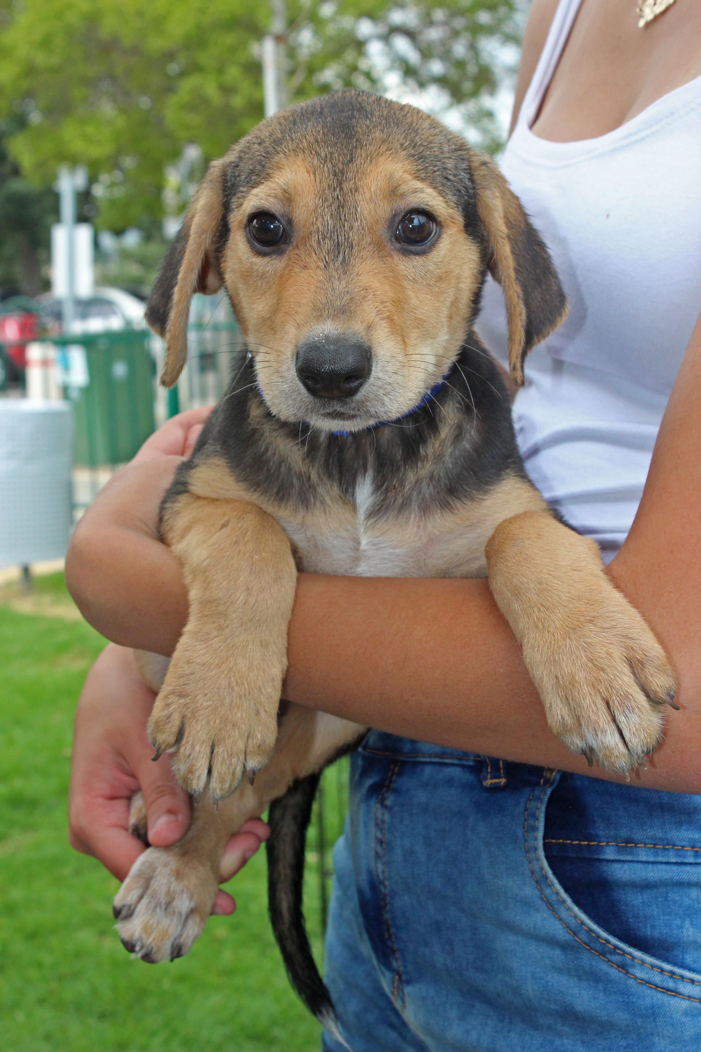 מסודר אמץ כלב : יום אימוץ מיוחד יתקיים בקניון סינמול – בלינקר ZA-93