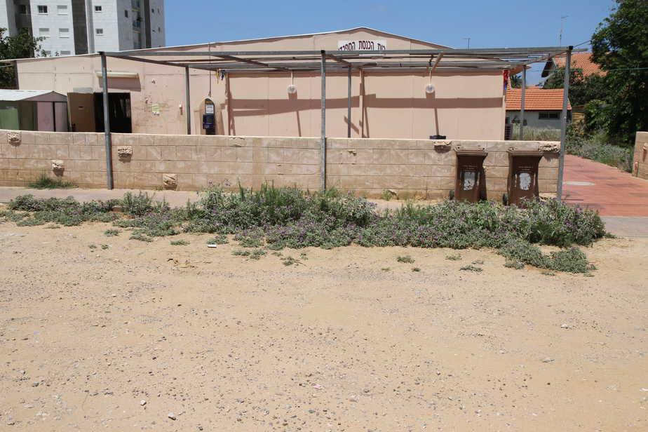 בית הכנסת (צילום שלומי גבאי)