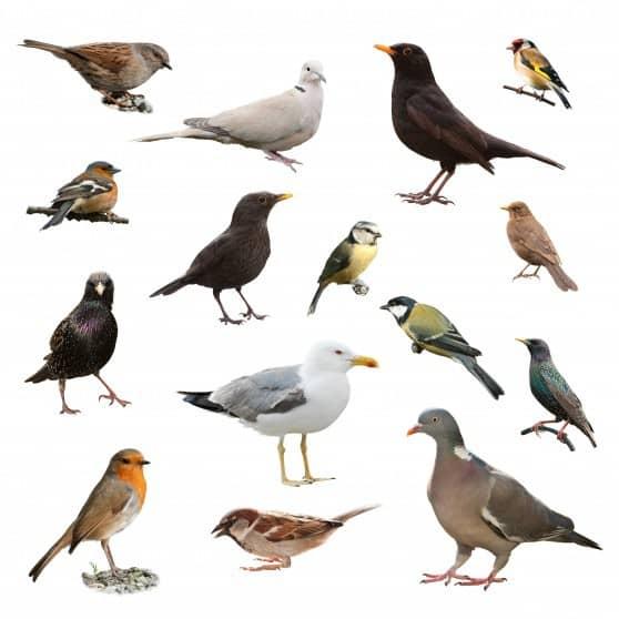 להיזהר ממחלות ציפורים (צילום אילוסטרציה: פנתרמדיה)