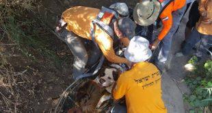 חילוץ כלב (צילום דוברות)
