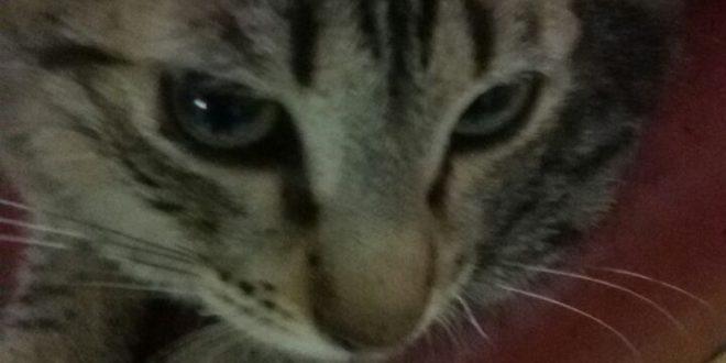 גורת חתולים בת 5 חודשים