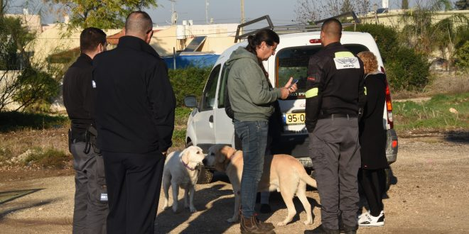 מבצע אכיפה נגד כלבת בקרית אתא. צילום: דוברות העירייה