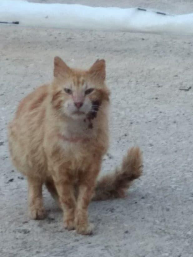 חתול פצוע במעלות צילום עצמי