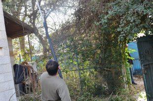 בודקים את כשירות העצים (צילום דוברות עיריית נצרת עילית)