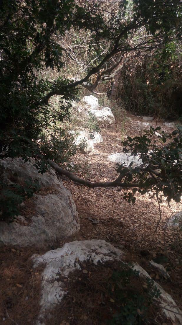 חורשת הגדעונים (צילום: פרטי)