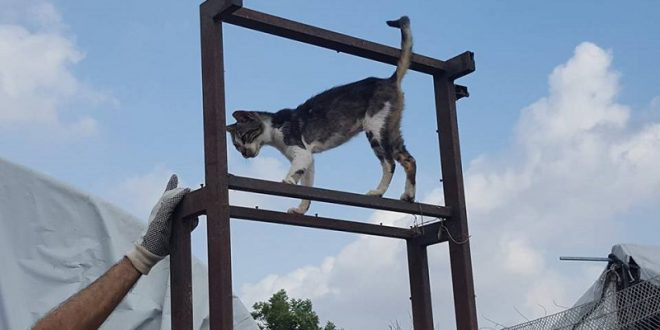 חתולים בצמרת. צילום: נירית שפאץ