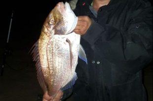 """לוקוסים במשקל 5 ק""""ג.  הדיג בשמורת ראש הנקרה צילום: פרטי"""