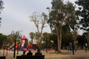 העץ הנדיר שגדל בקרית מוצקין. צילום: דוברות העירייה