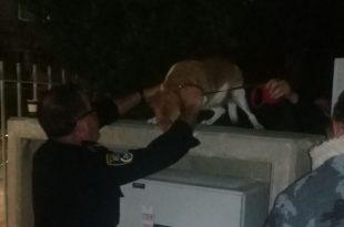 מחלצים את הכלבה. צילום: דוברות העירייה