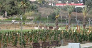 פארק זכרון יעקב (צילום: המועצה המקומית זכרון יעקב)