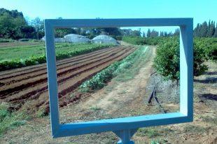צילום: באדיבות החווה החקלאית חדרה
