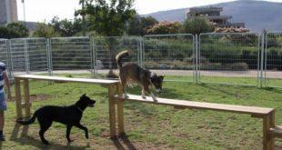 התעללות בכלבים, אילוסטרציה