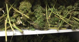 סמים בדירה. צילום דוברות המשטרה