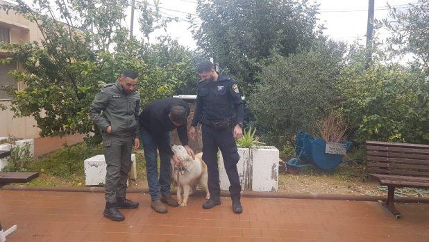 הכלב הוחזר. צילום דוברות המשטרה