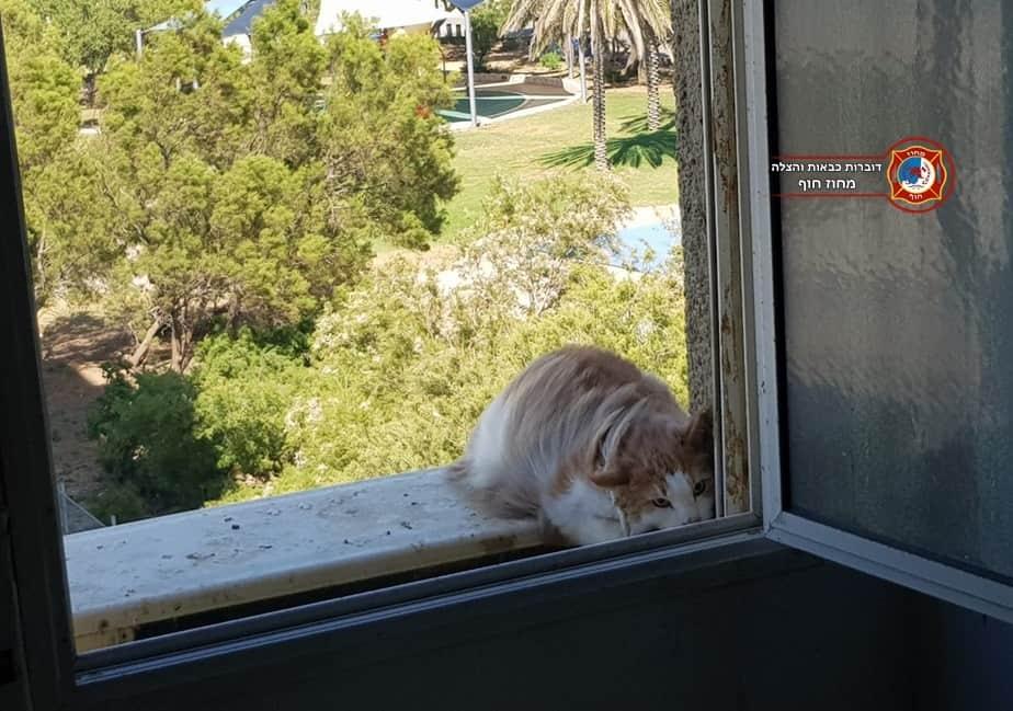 יצא ללא פגע. החתול פב | צילום: דוברות כיבוי והצלה מחוז חוף