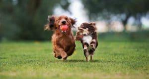 כלבים בפארק | צילום: shutterstock