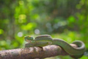 איך יודעים אם הנחש ארסי, ומתי להזמין לוכד נחשים | תמונה: Freepik