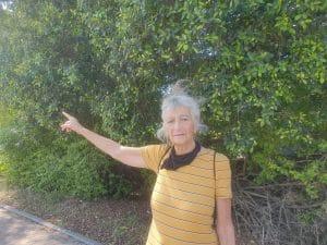 אילנה פלדה מצביעה לעבר שדרת הברושים \ צילום: איילת קדם