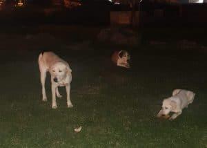 הכלבים שהושלכו \ צילום: באדיבות רז בן שלמה