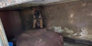 הכלב כפי שנמצא אתמול | צילום: דוברות המשטרה