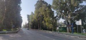 שדרת האקליפטוסים כביש עכו-בוסתן הגליל   צילום: דוברות מטה אשר