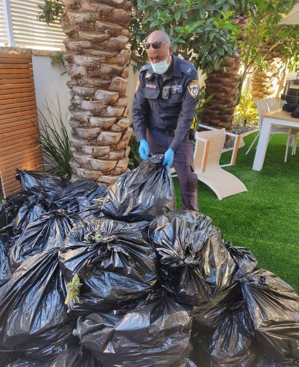 חשיפת הסמים בעכו | צילום: דוברות עיריית עכו